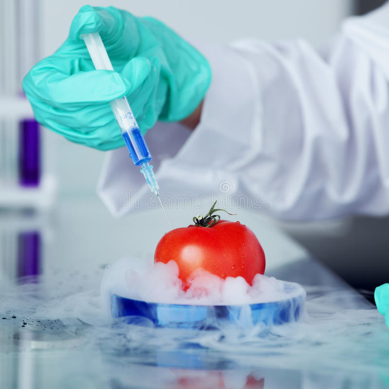 Mudança do ADN do tomate fotos de stock