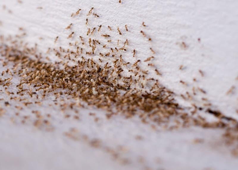 Mudanza de las hormigas imagen de archivo libre de regalías