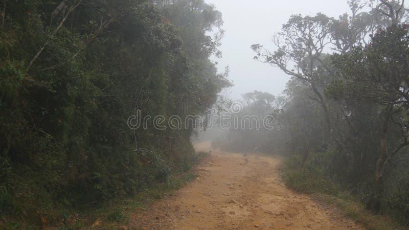 Mudanza a lo largo de la trayectoria de la montaña entre el paseo tropical de Point of View del bosque a través de la trayectoria imágenes de archivo libres de regalías