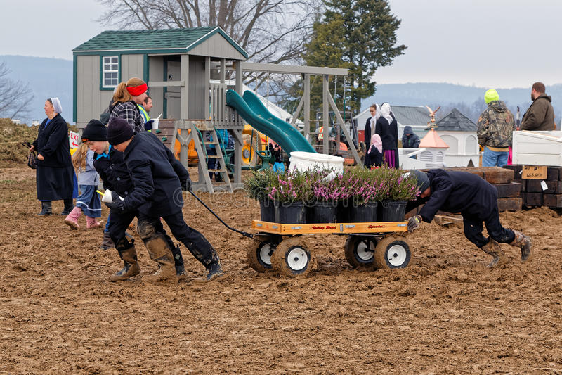 Muddy Day at Lancaster County Auction. PENRYN PENNSYLVANIA - MARCH 18, 2017: Amish boys haul potted plants for buyers on a rainy muddy day at the annual Amish stock photography