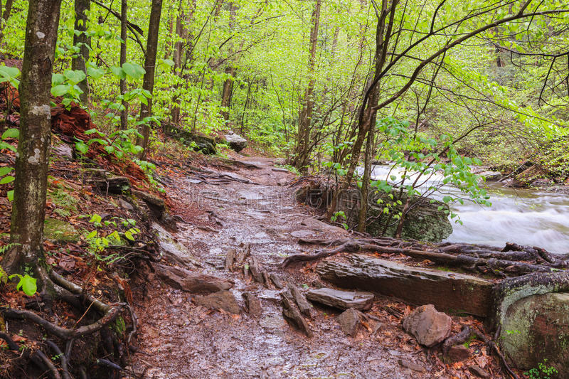 Muddy Hiking Trail Pennsylvania images stock