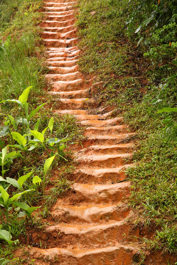 Download Muddy jungle stairs stock image. Image of plants, lush - 24443131
