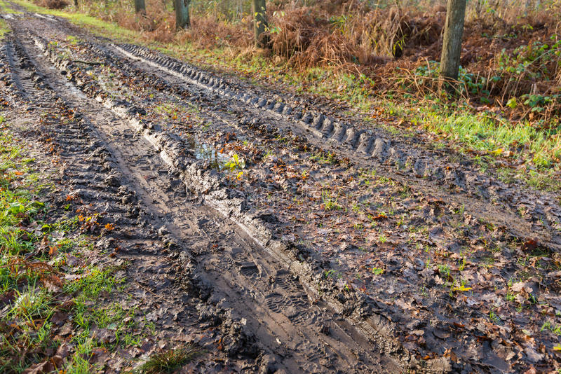 Muddy path through the forest with wheel tracks stock photo