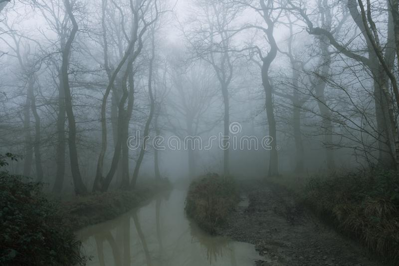 A muddy, path, next to a flooded stream, through a spooky, eerie forest. On a mysterious foggy, winters day.  royalty free stock photo