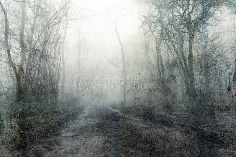 A muddy, path through a spooky, eerie forest. On a mysterious foggy, winters day. With a textured, vintage, grunge, edit.  stock photography