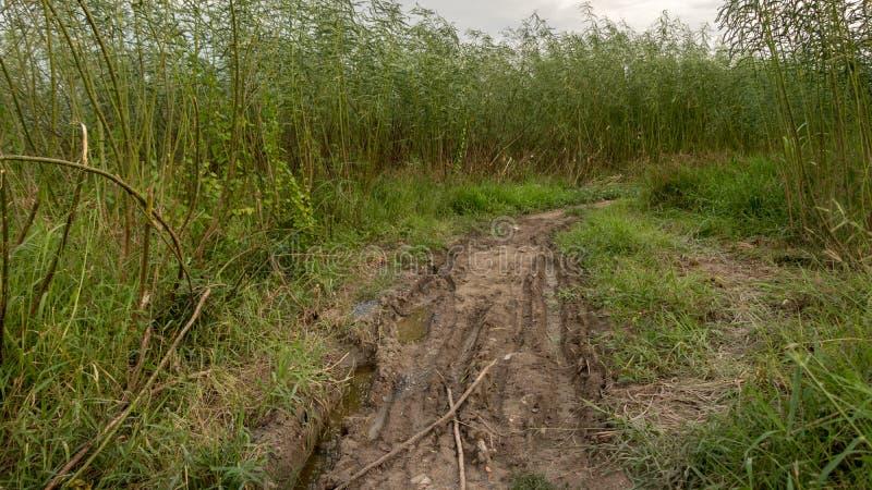 Muddy Path Surrounded ruvido con gli alberi verdi alti ed erba - strada rurale dopo la pioggia immagine stock