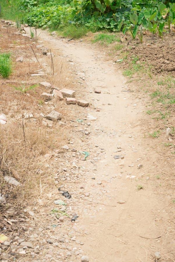 Muddy pathway stock photo