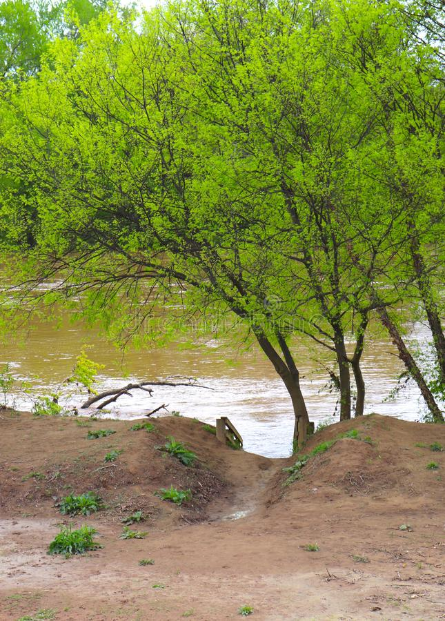 Muddy Pathway to River With Overseen by Bright Green Leafed Tree stock image