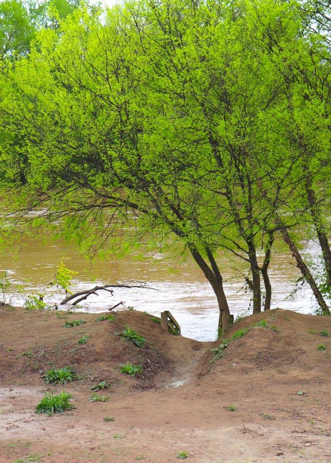 Muddy Pathway zum Fluss mit beaufsichtigt durch hellgrünen Blätter getriebenen Baum stockbild
