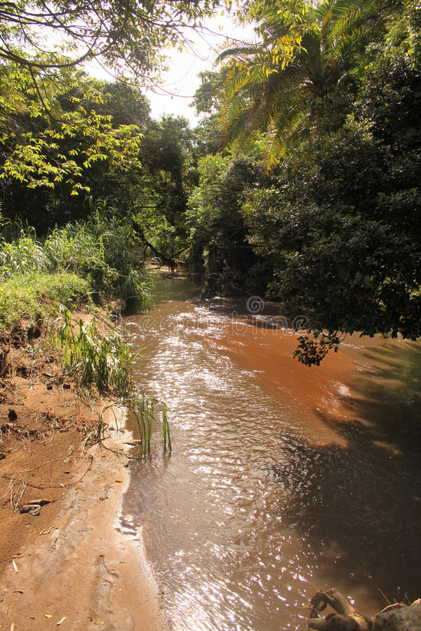 Muddy River Through Tropical Forest photo stock