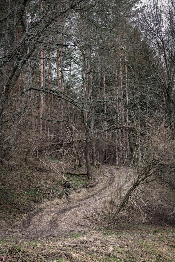 Muddy road landscape in the forest royalty free stock photo