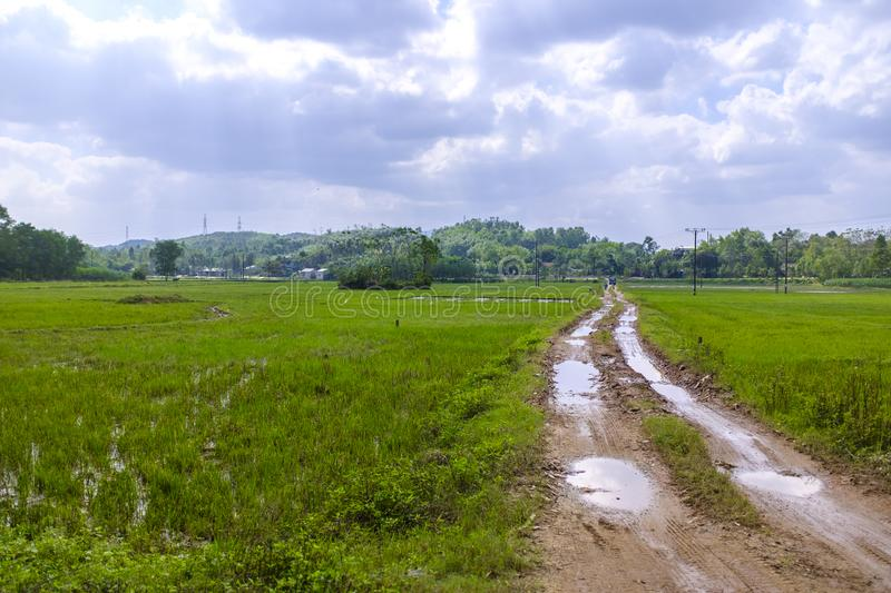 Muddy road in rice fields. A muddy road in a countryside just outside Hue, Vietnam, going through rice fields stock images