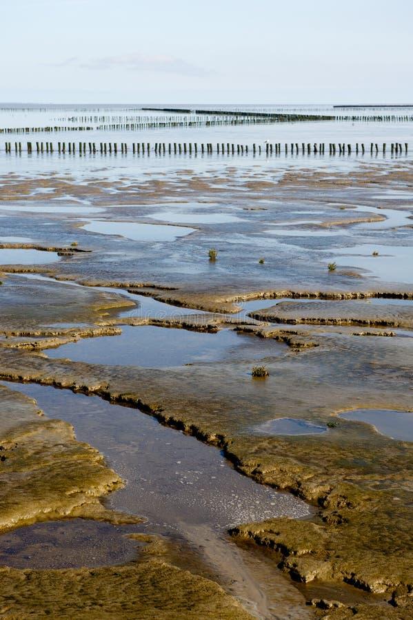 Mudflat photographie stock libre de droits