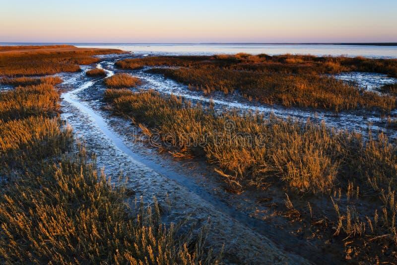 Mudflat du Waddensea. photographie stock libre de droits