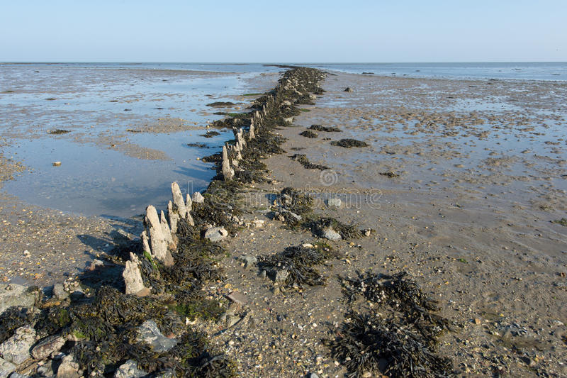 Mudflat in Dutch sea. Shallow mudflat in Dutch wadden sea at Terschelling stock photography