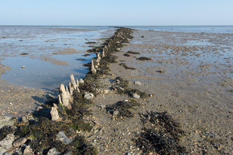 Mudflat en mer néerlandaise photographie stock