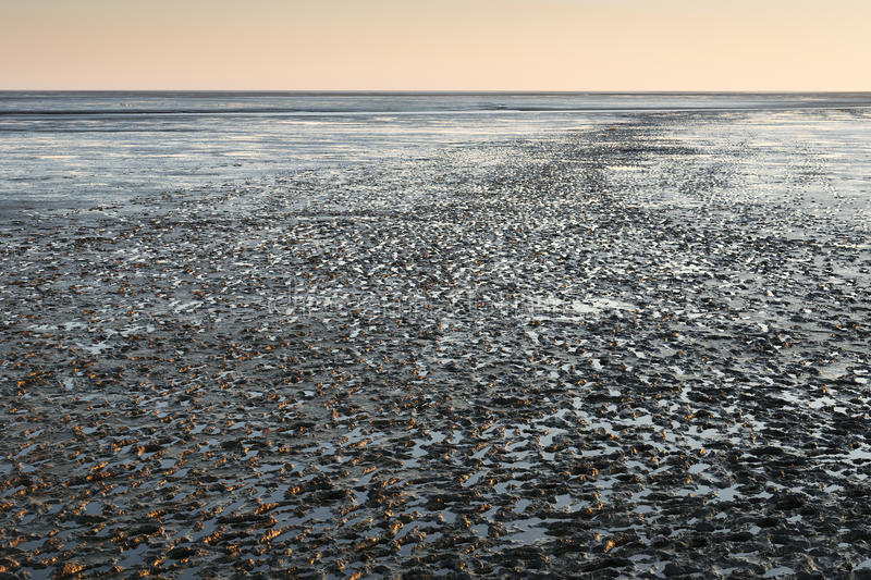 Mudflat landscape at sunset. Image of mudflat landscape in Northern Germany at sunset stock image