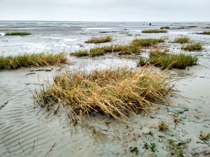 Mudflat - patrimoine mondial - site naturel dans Schillig photo stock