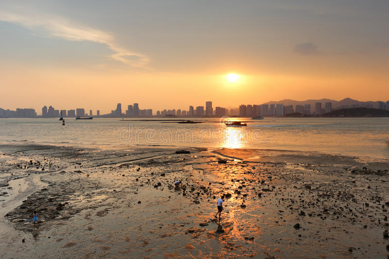 Mudflat sunset. People collect shells at mudflat, amoy city, china stock photography
