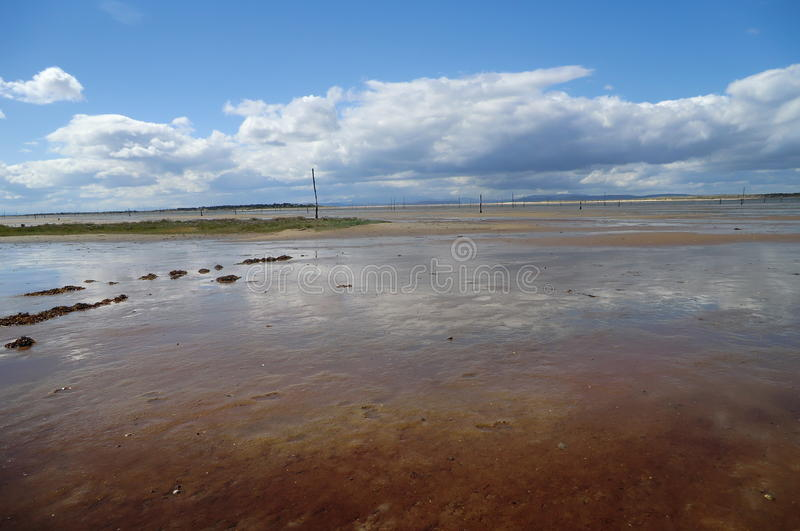 mudflats стоковые фотографии rf