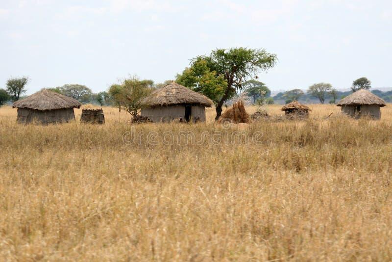 Mudkojaby - Tarangire nationalpark. Tanzania Afrika arkivbilder
