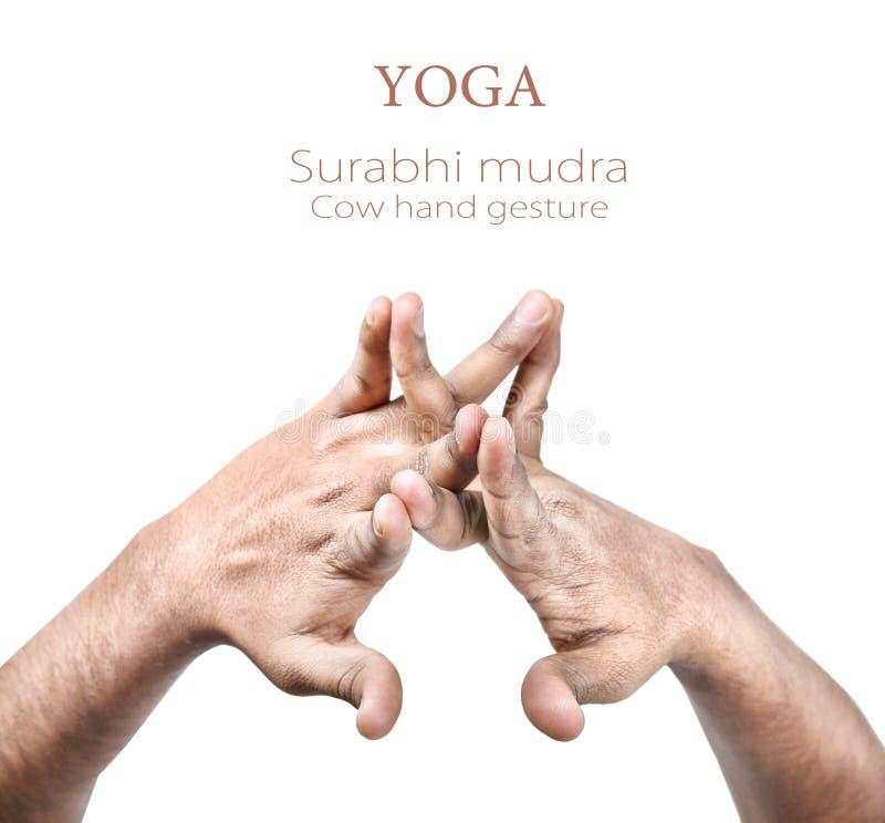 Mudra de Surabhi images stock
