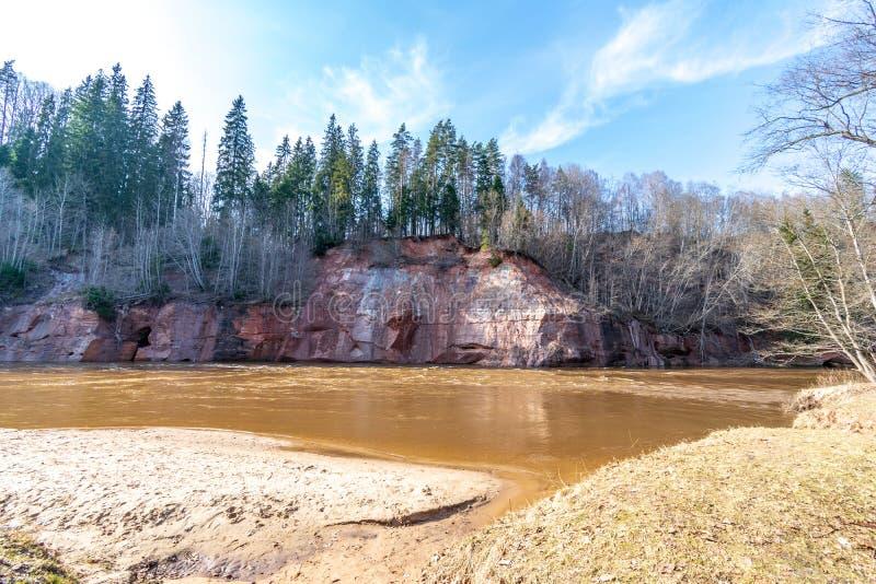 mudy brunt flöde för vårvatten i skogfloden royaltyfri foto