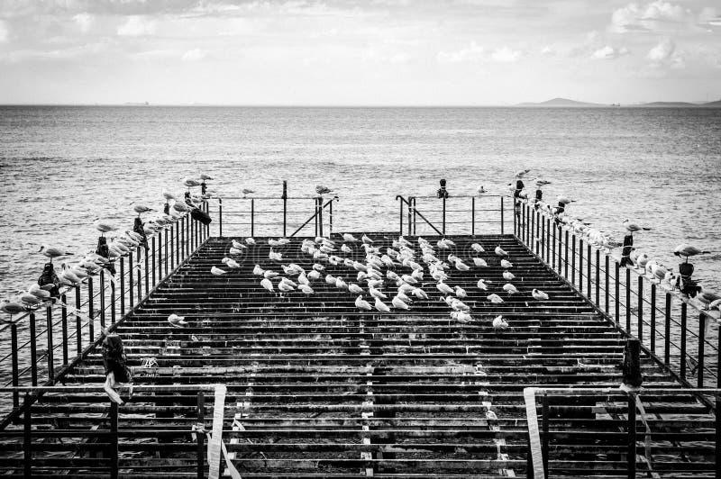Muelle Desolated con las gaviotas y el mar tranquilo fotografía de archivo libre de regalías