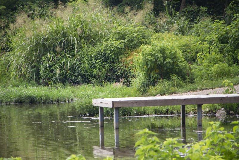 Muelle en un lago con la rampa y el cervatillo del barco fotografía de archivo libre de regalías