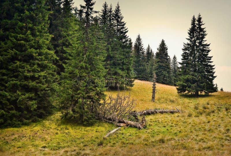 Muertes del bosque foto de archivo