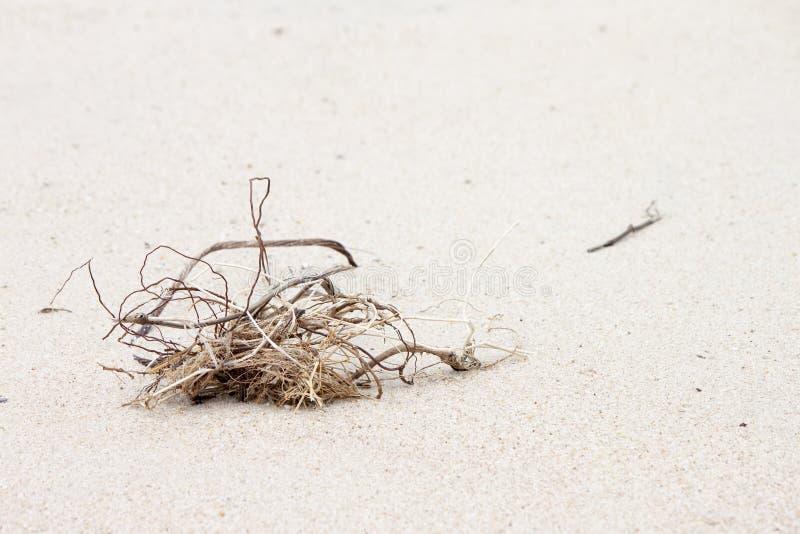 Muertos de la hierba en la arena fotos de archivo libres de regalías