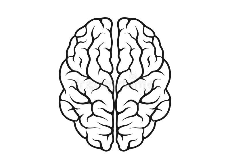 Muestra aislada contorno de la mente del vector del icono del cerebro ilustración del vector