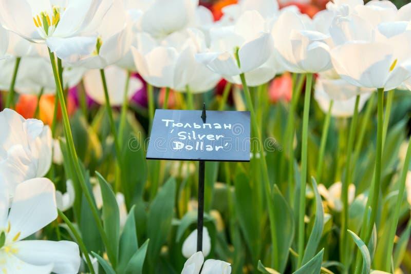 Muestra con el nombre de la variedad de los tulipanes fotografía de archivo