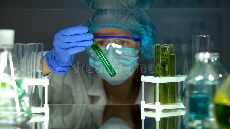 Muestra de examen de la planta del cient?fico de la ecolog?a en el tubo de ensayo, estudiando el nivel de la contaminaci?n fotografía de archivo