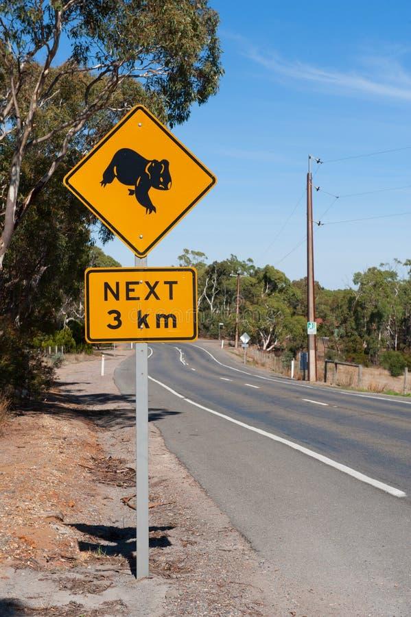 Muestra de la koala imagen de archivo libre de regalías