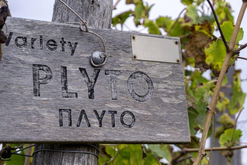Muestra de madera del viñedo de la variedad de Plyto fotografía de archivo libre de regalías