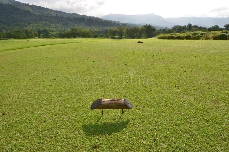 Muestra de madera a T del golpe en la corte de hierba verde del campo del golf fotografía de archivo libre de regalías