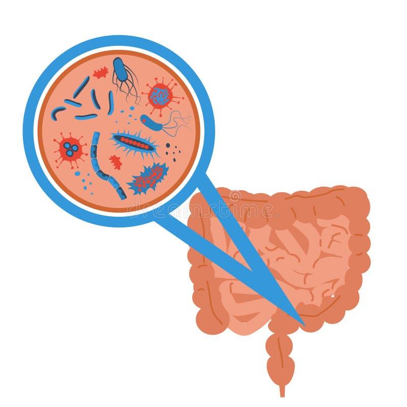 Muestra intestinal de la flora ilustración del vector