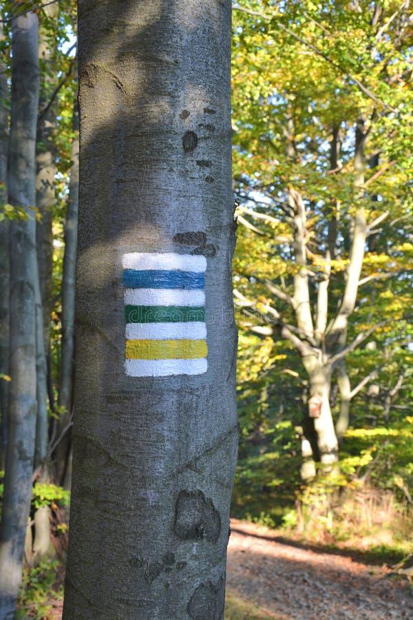 Muestras pintadas de los rastros de montaña en árbol fotos de archivo