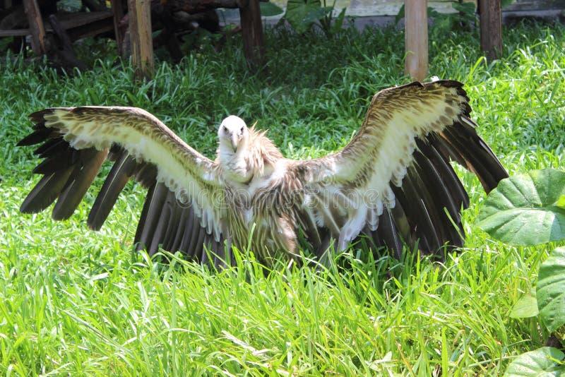 Muestre apagado el águila fotografía de archivo