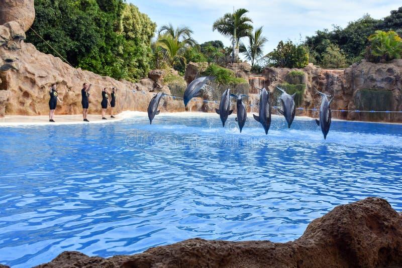 Muestre con los delfínes foto de archivo libre de regalías