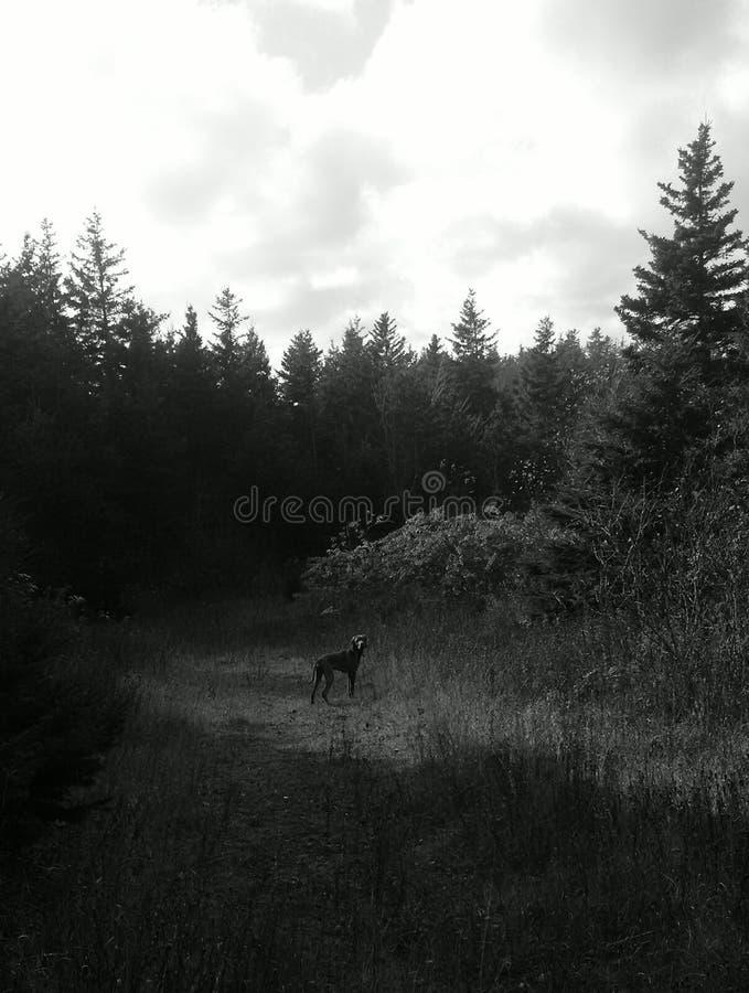 Muestre el perro en luz del punto del ` s de la naturaleza imagen de archivo libre de regalías