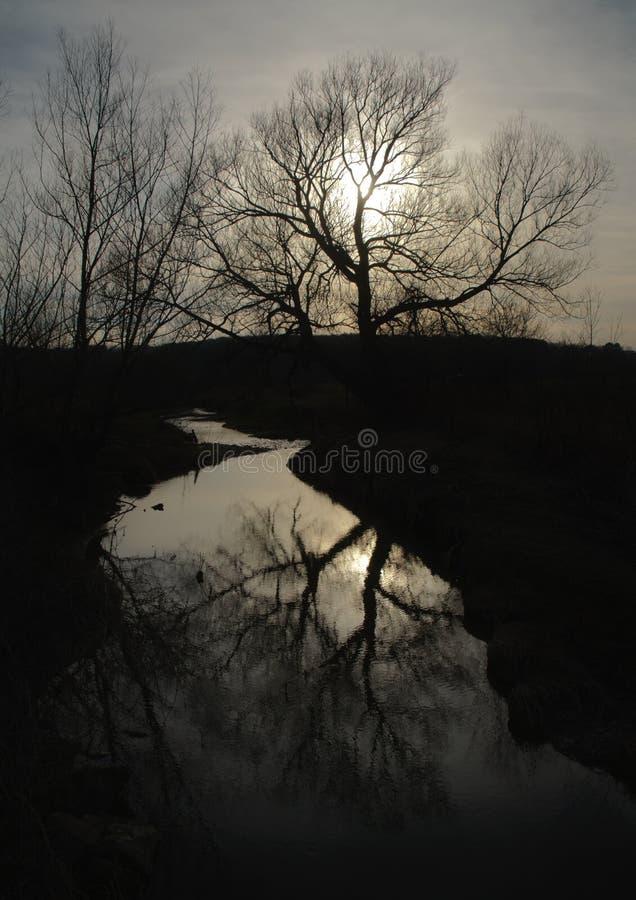 Mueva hacia atrás el árbol encendido imagen de archivo libre de regalías