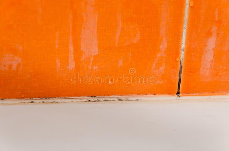 Muffa, fungo e limescale sulle mattonelle fotografia stock libera da diritti