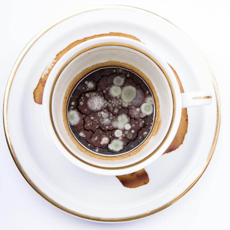 Muffa nella tazza non lavata fotografia stock libera da diritti