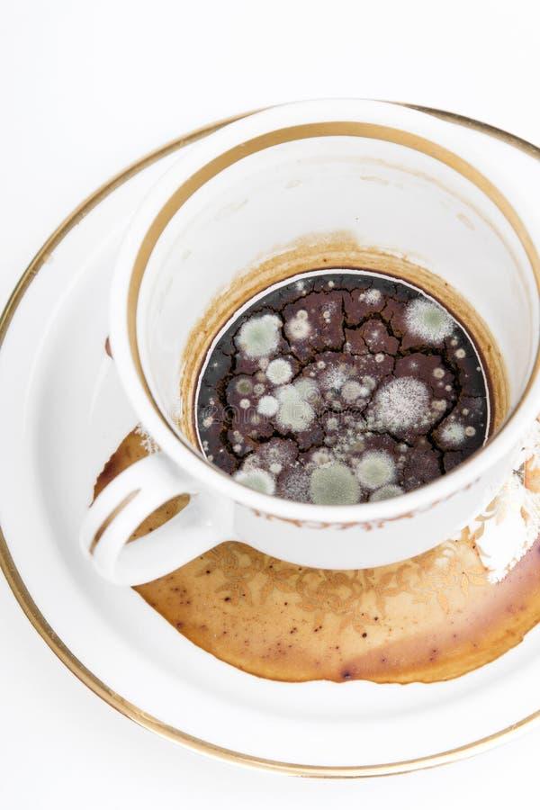 Muffa nella tazza non lavata fotografie stock libere da diritti