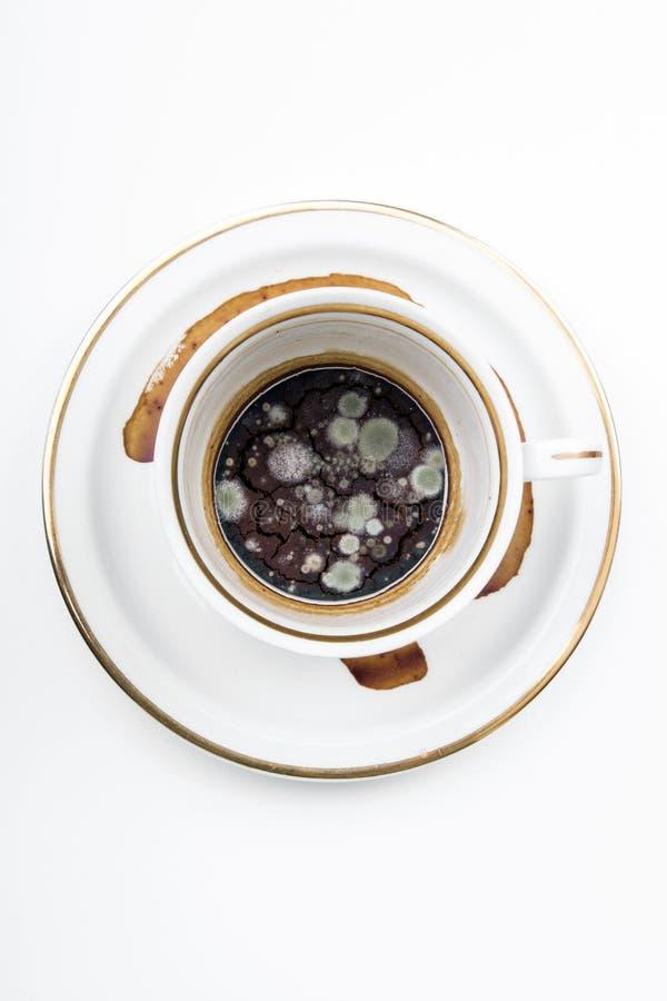 Muffa nella tazza non lavata immagine stock