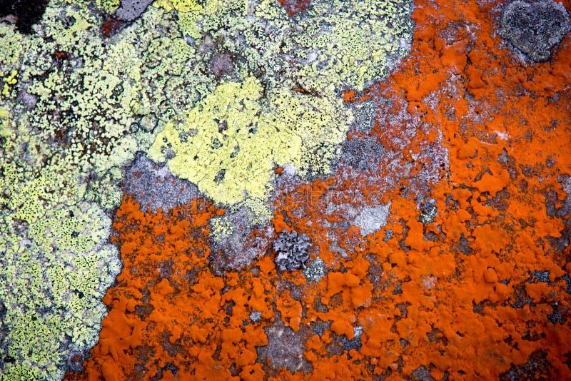 Muffa sulla superficie della pietra immagini stock