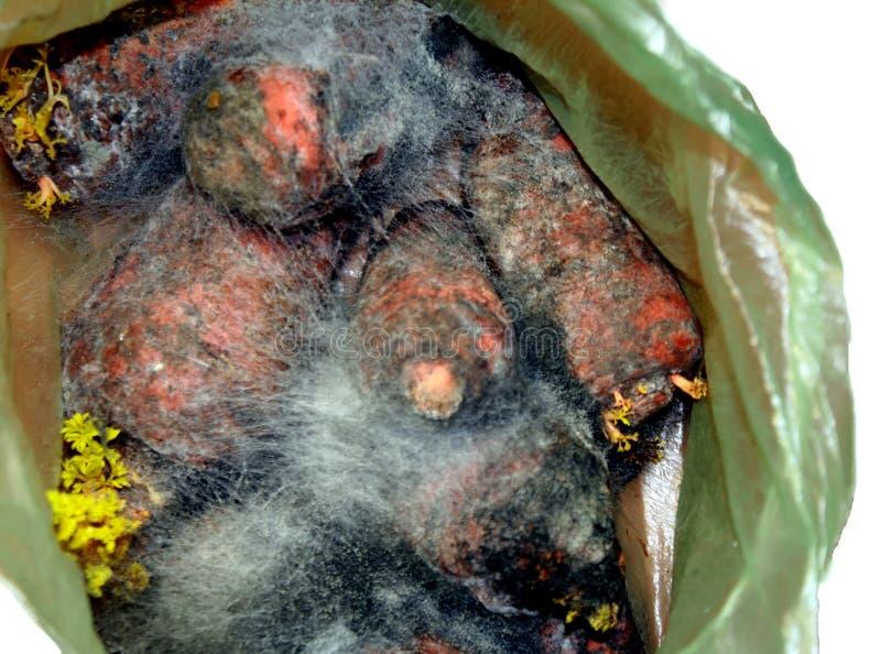 Muffa sulle verdure Le carote sono marcie in muffa Rifiuti alimentari fotografia stock libera da diritti