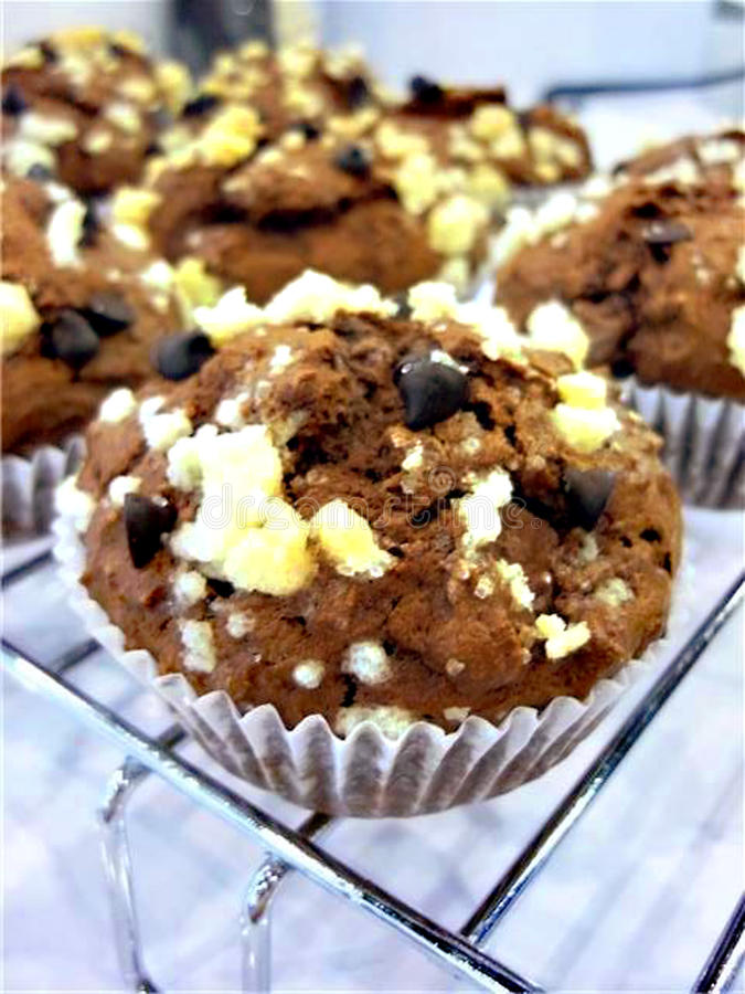 Muffin chocolate chip stock photos